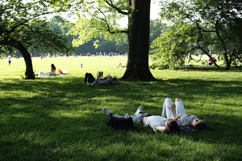 Sommergefühle Tree Grass Sitting Growth Women Relaxation Men Day Nature Park - Man Made Space Togetherness Outdoors Branch Real People Tree Trunk Large Group Of People Adult Beauty In Nature Bird Adults Only
