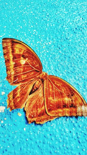 Beauty In Nature Close-upmoth fineart Fragility