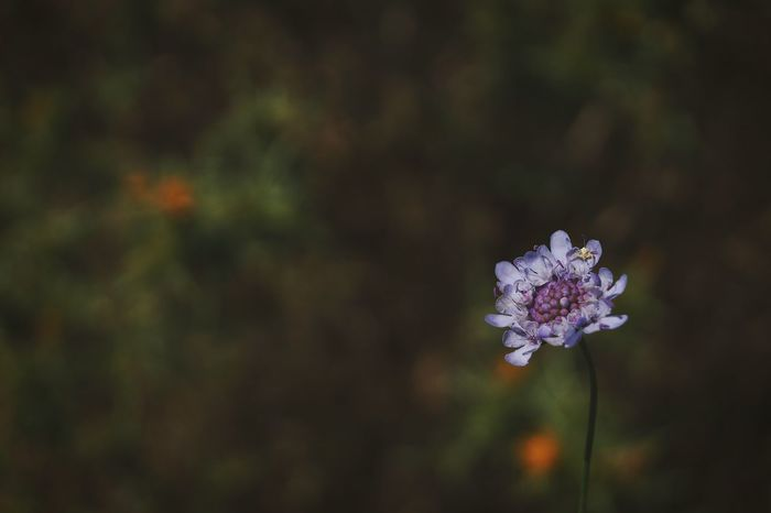 Outdoors Croatia ❤ No People EyeEm Nature Lover Breathing Space The Week On EyeEm Nature Beauty In Nature Green Color Purpleflower Freshness Close-up