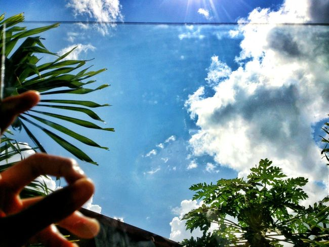 Clouds And Sky Trees PAPAYATREE :) Glass Eyeem Philippines