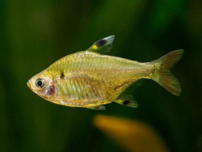 Close-up of fish swimming