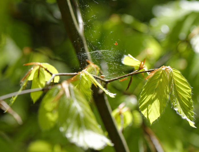 A spinweb in Weißenborner Wald near Zwickau Animal Themes Animals In The Wild Beauty In Nature Close-up Day Focus On Foreground Forest Forest Photography Green Color Growth Insect Leaf Nature No People One Animal Outdoors Plant Spider Spider Web Spiderweb Tree Waldpark Web Weißenborner Wald