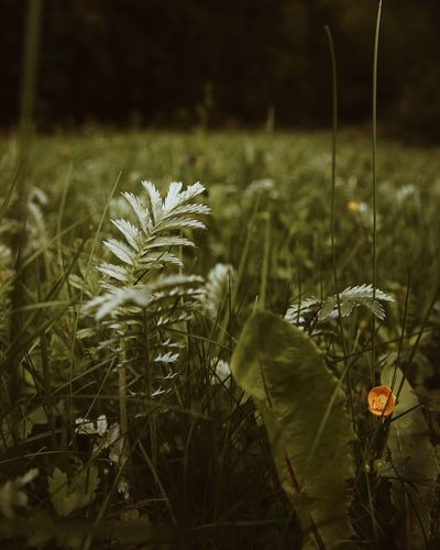 Growth Nature Plant Uncultivated Grass Beauty In Nature No People Outdoors Close-up Tranquility Flower Fragility Day Freshness