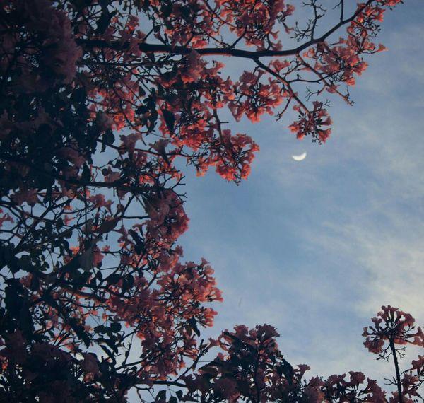 The Great Outdoors - 2017 EyeEm Awards Tree Sky Moon Flower Beauty In Nature Dreams