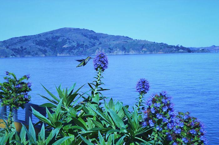 Oh, the beauty. Flower Beauty In Nature Hummingbird Alcatraz Island Gardens Of Alcatraz Garden Photography San Francisco Hidden Gems