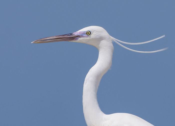 heron Heron
