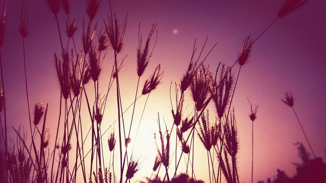 Beauty In Nature Sky Plant Sunset