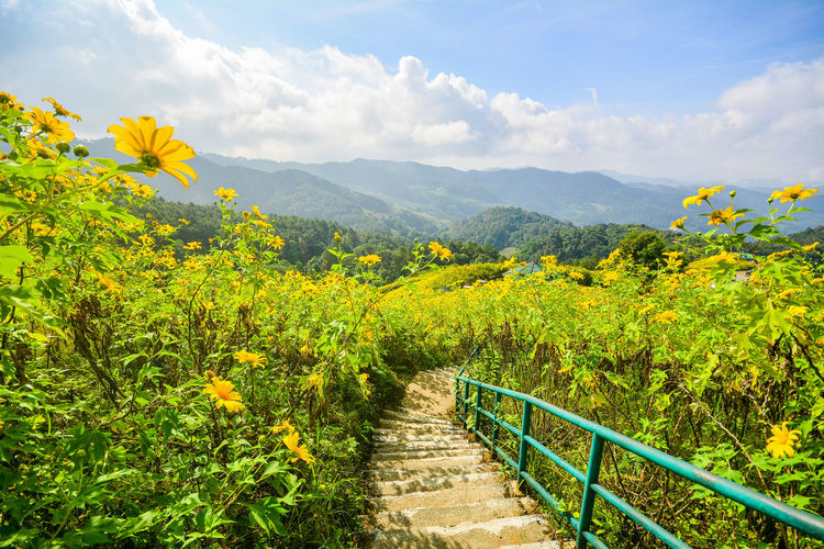 Scenic view of yellow flowering plants against sky