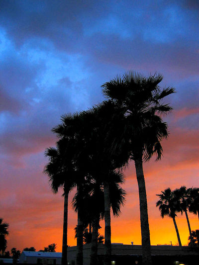 Beauty In Nature Cloud - Sky Coconut Palm Tree Growth Low Angle View Nature No People Orange Color Outdoors Palm Tree Plant Scenics - Nature Silhouette Sky Sunset Tall - High Tranquility Tree Tree Trunk Tropical Climate Tropical Tree Trunk