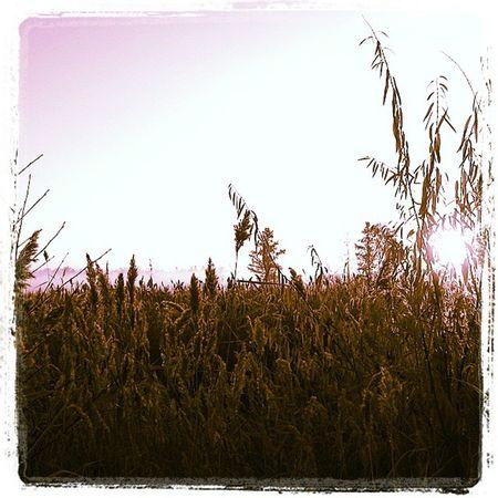 омск сибирь утро рассвет паркпобеды кэнон туман Omsk Siberia Autumn Sunrice Morning Canon Nature Fog