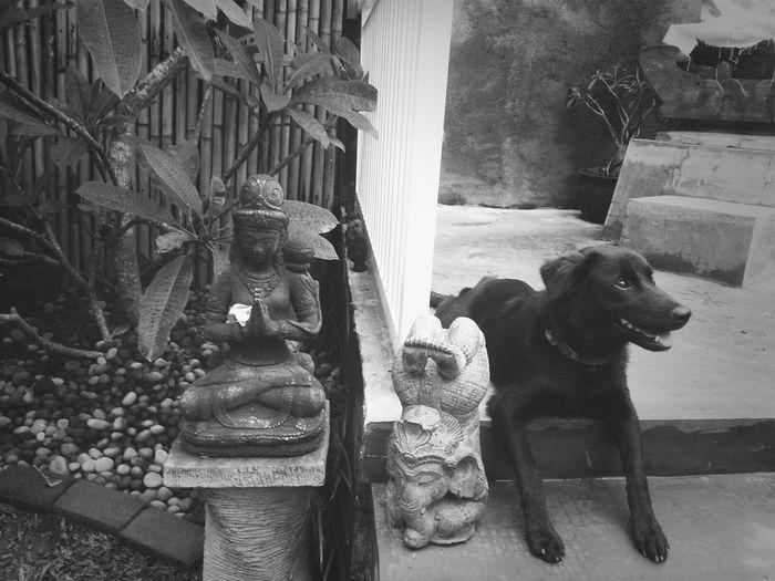 her favorite place Puppy Blackandwhite Hello World Bali