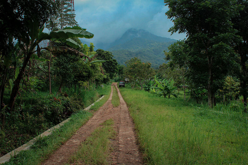 Dirt road amidst trees and plants