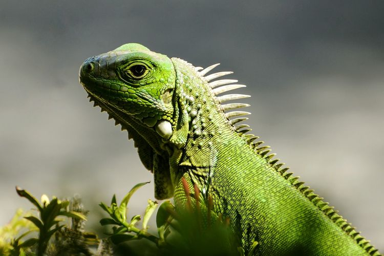 Close-up side view of reptile