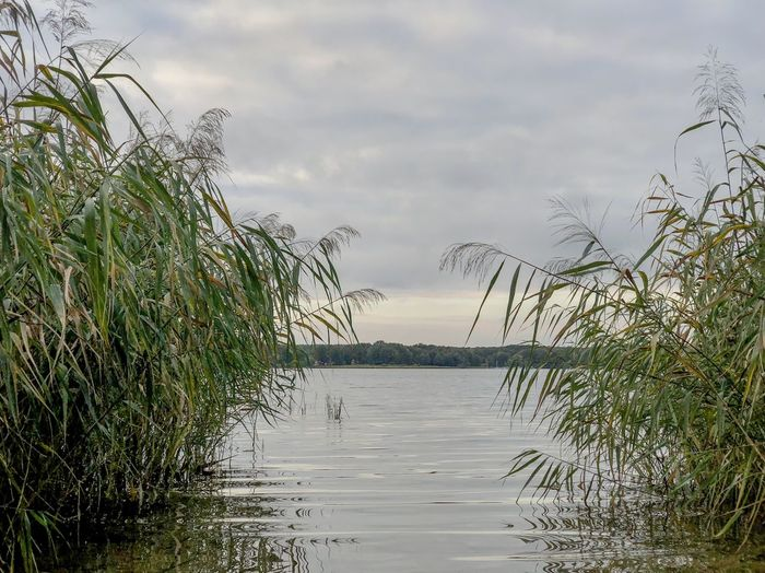 Lakeside in Brandenburg Nature_collection Outdoors Travel Destinations Sky Water Plant Cloud - Sky Beauty In Nature Tranquility Growth Nature Tranquil Scene No People Scenics - Nature Day Grass Sea Outdoors Beach Non-urban Scene Tree Land Marram Grass