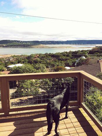 Love my new view of Lake Travis ? Check This Out Dog Cute Pets Mine Like Likeforlike Austin Texas LakeTravis