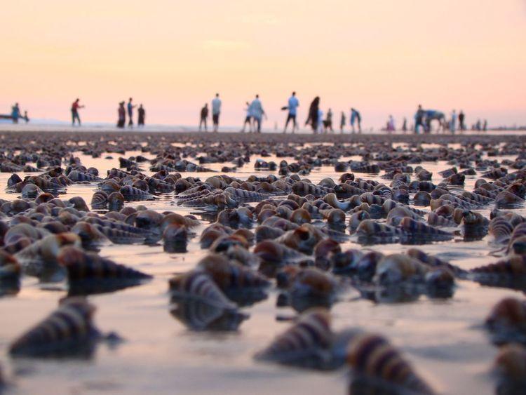 fell the natureFeel The Journey Nature Seabeach Sea Life Original Experiences Cox's Bazar Bangladesh 43 Golden Moments