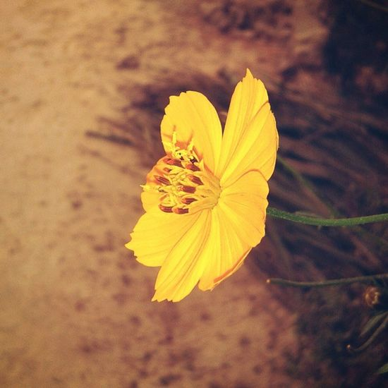 """The flower that blooms in adversity is the rarest and most beautiful of all"" - Walt Disney Company. Flower Bloom Evening Time Instaupdate Instanature Instaphoto_for_like_comment_share Rsphotography Follow Me ."