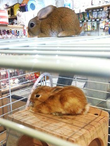 Do u know which real bunnie? Bunnie Bunnies ❤️ Cute Pets Hi!