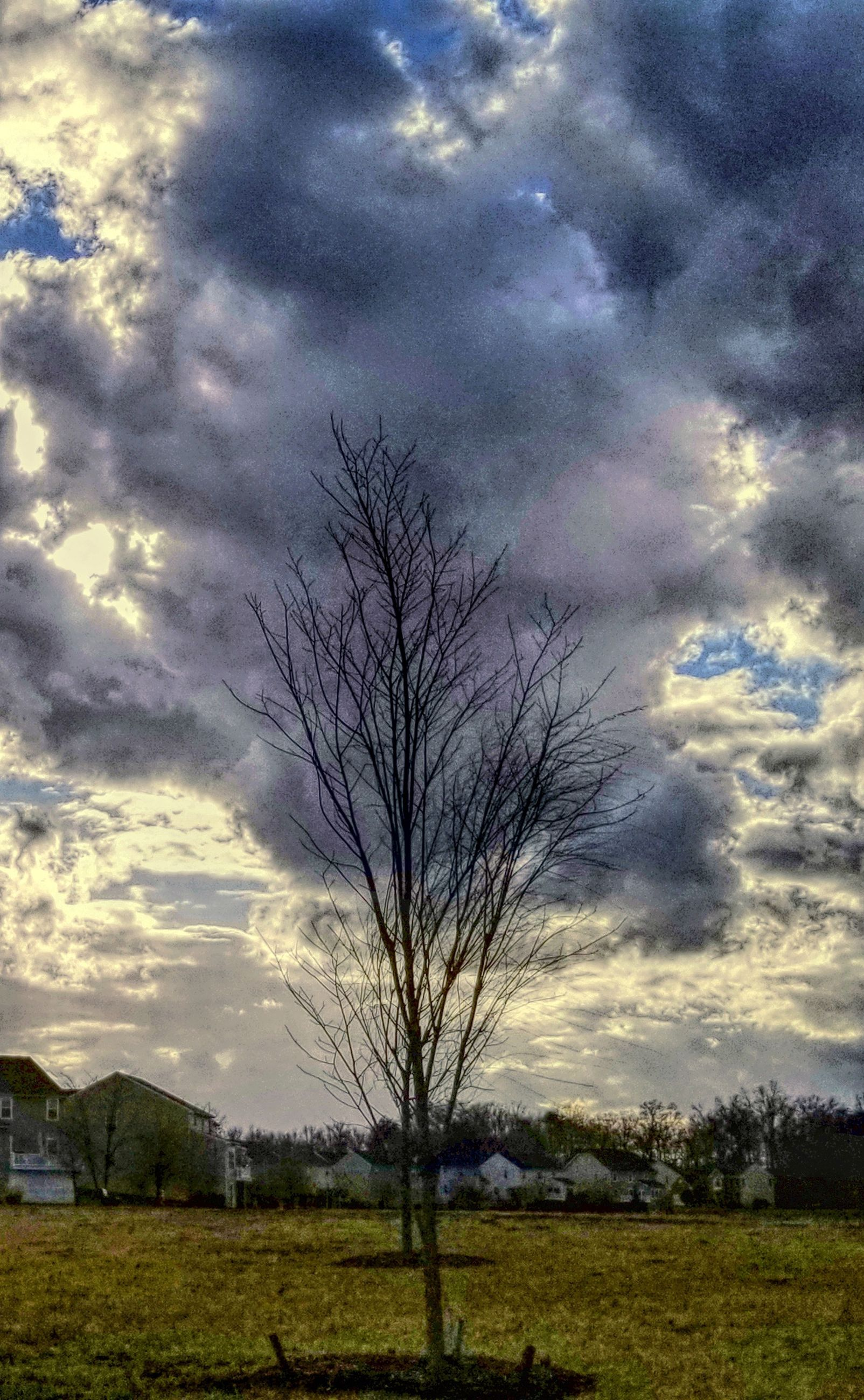 cloud - sky, sky, tree, tranquil scene, plant, beauty in nature, tranquility, landscape, scenics - nature, bare tree, nature, field, environment, land, no people, sunset, outdoors, grass, non-urban scene, isolated