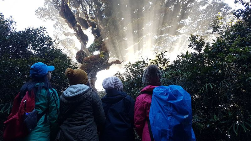Mother Mossy Tree in Natural Beauty Naturallight Naturallighting Naturallightphotography Benguet Philippines Amazingbeauty  Benguetprovince Beautiful Mountainer Mountainering Hiker Beautyofnature BeautyOfLife Beautifulpulag Tree Water Men Sky