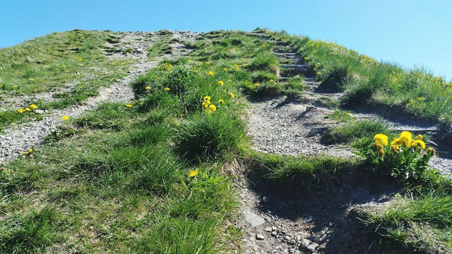 stairs to Haeven Hilltop Mountain Path Stages Upwards Shot Go Up Mountain Nature_collection Sky Close-up Grass Green Color Blooming