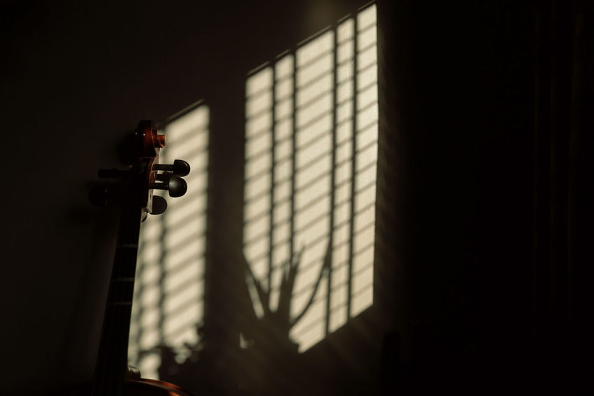Morning Light - Morning Music Plant Architecture Blinds Cello Close-up Day Indoors  No People Shadow Sunlight Window