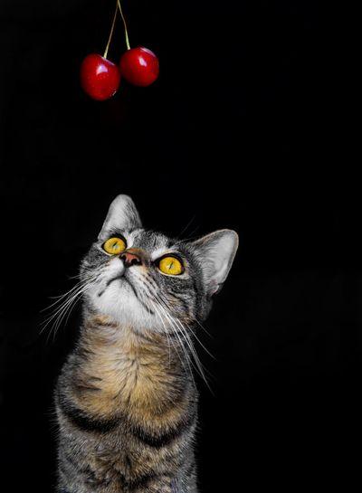 the cat wants