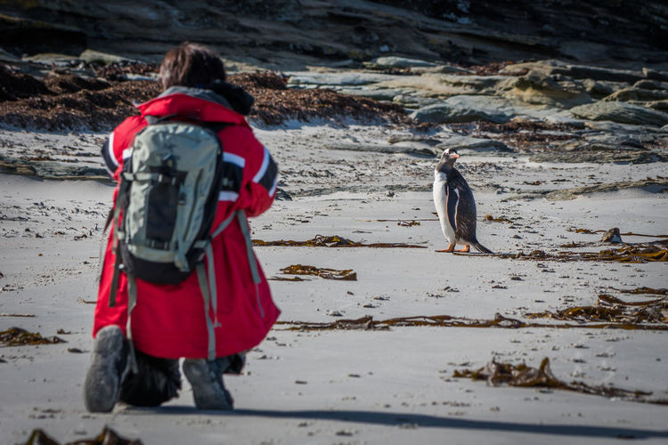 Rear View Of Man Kneeling With Penguin At Beach