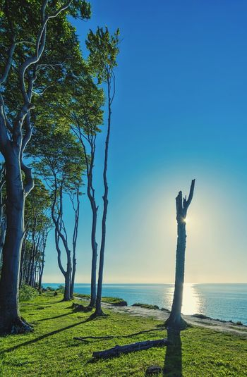 Baltic Sea Beauty In Nature Bäume Coast Day Forest Forest Trees Gespensterwald Grass Horizon Over Water Landscape Meerblick Natur Nature Nienhagen Ostsee Outdoors Scenics Sea Sky Sunset Sunset Silhouettes Tree Tree Trunk Water