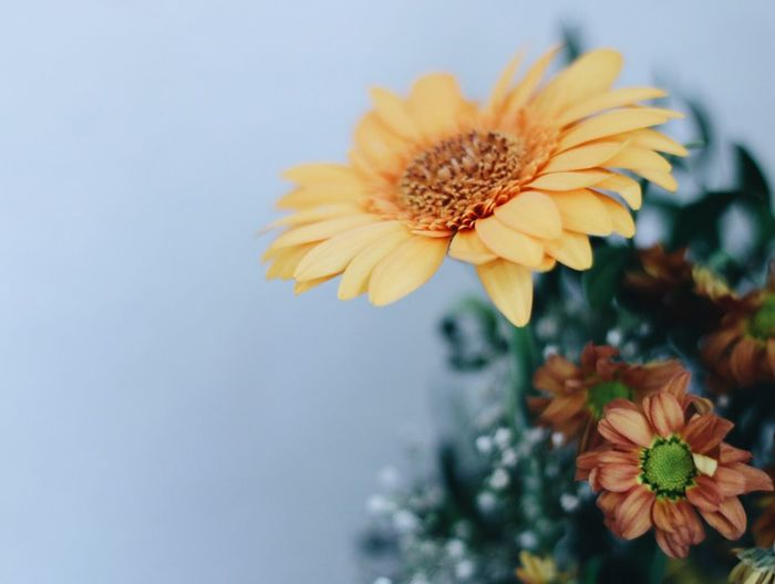 Stillleben Flowering Plant Flower Plant Freshness Flower Head Growth The Still Life Photographer - 2018 EyeEm Awards Fragility Petal Vulnerability  Close-up Beauty In Nature Nature Focus On Foreground No People Yellow Orange Color