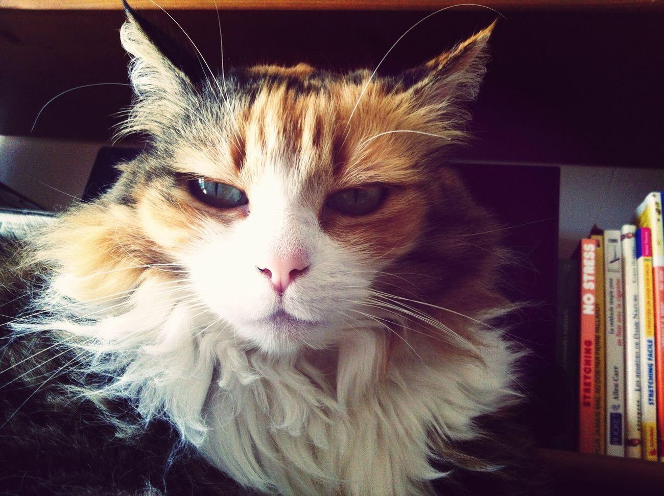 Cat Snapcat
