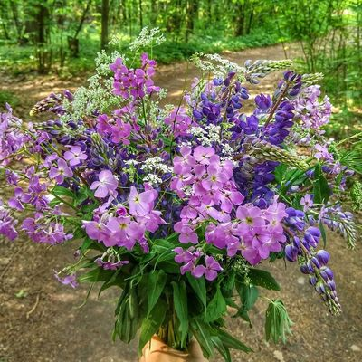 Flower Purple Nature Growth Beauty In Nature Day No People Outdoors Plant Fragility Freshness Flower Head Close-up