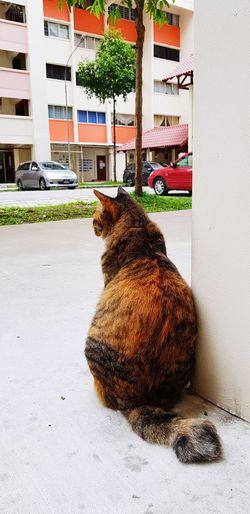 ignorance is bliss Ignorance Is Bliss Ignore Cat Pets Sitting Domestic Cat Portrait Architecture Building Exterior Built Structure Feline Cat Stray Animal