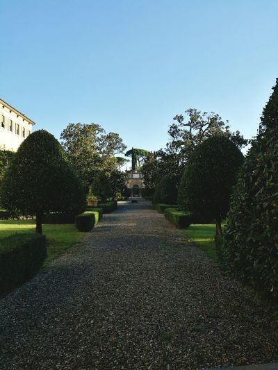 Clear Sky The Way Forward Tree Growth Tranquil Scene Plant Formal Garden Hedge Park - Man Made Space Tranquility Travel Destinations Topiary Footpath Scenics Diminishing Perspective Beauty In Nature Walkway Green Color Nature Day