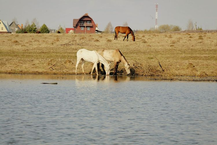 Horse in water against sky
