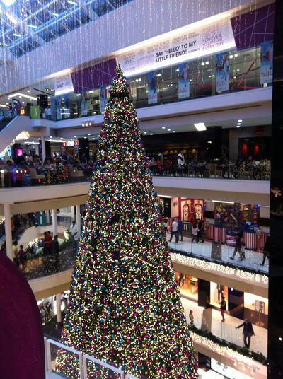 Christmas Chrismas Time Christmas Tree Holiday