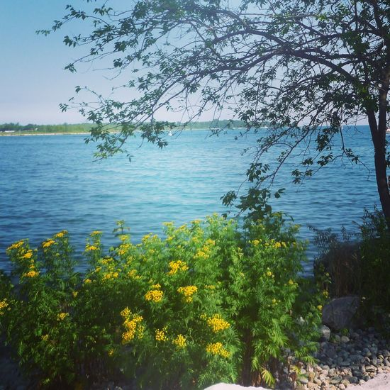 Water Nature Beauty In Nature Growth Tree Plant Tranquility Tranquil Scene Lake Scenics No People Flower Outdoors Vegetation Day Yellow Sky Landscape Clear Sky Scenery Canada