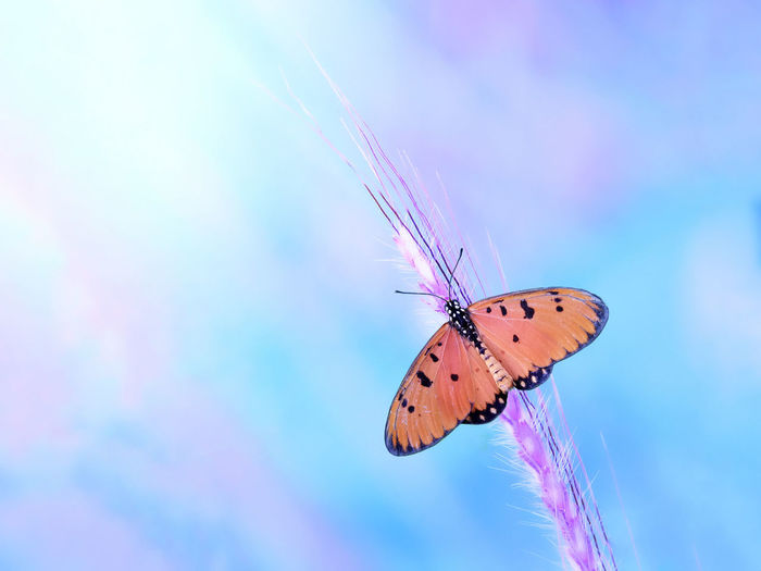 Insect Butterfly - Insect One Animal Bright Fragility Purple No People Nature Animals In The Wild Animal Wildlife Perching Animal Themes Full Length Close-up Beauty In Nature Beauty Outdoors Freshness Spread Wings Day
