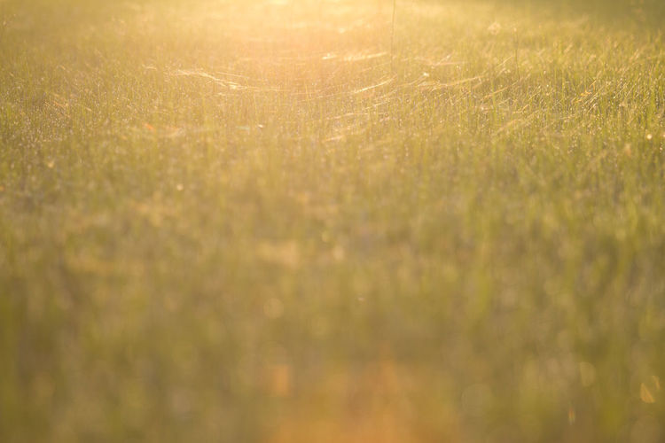 Green rice field at sunset. Grass Plant Backgrounds Sunlight Nature No People Selective Focus Field Beauty In Nature Defocused Land Abstract Outdoors Tranquility Abstract Backgrounds Full Frame Environment Gold Colored Day Landscape Bright Brightly Lit