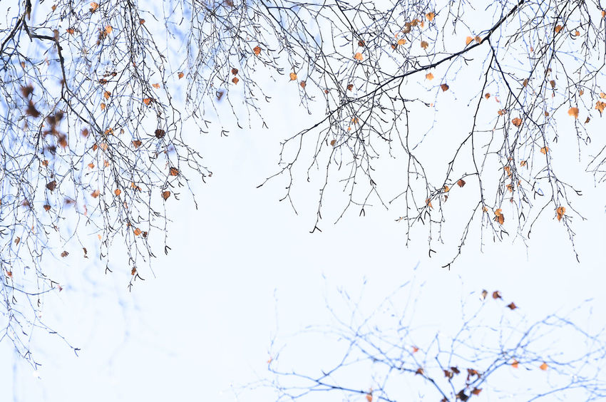 Werdensteiner_Moos_2018_11_11919.jpg Tree Plant Low Angle View Sky Nature No People Bare Tree Day White Color Clear Sky Outdoors Autumn colors Autumn Autumn Leaves Line Structure Lines Lines And Shapes