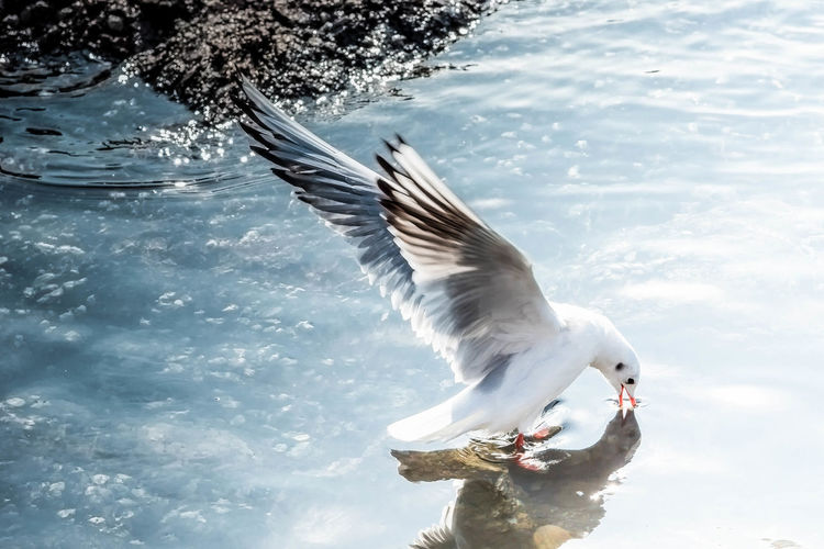 Animal Themes Animals In The Wild Beauty In Nature Bird Close-up Day Lake Nature One Animal One Person Outdoors Sky Spread Wings Tree Water