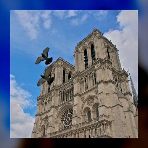 Notre-Dame de Paris. Notre-Dame Paris Birds EyeEm Best Shots
