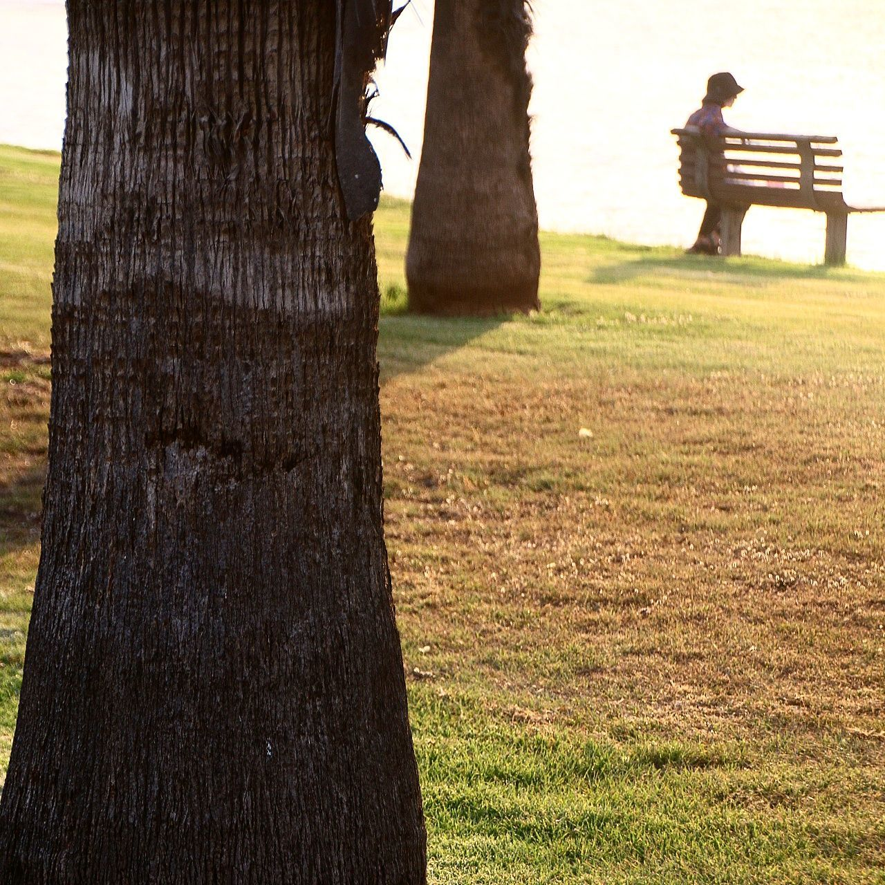 tree trunk, tree, nature, grass, outdoors, day, adult, care, responsibility, men, one person, one man only, people, adults only, only men