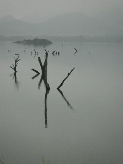 Dead trees in Lake. Sri Lanka. Dead Tree Sri Lanka Beauty In Nature Day Drowned Lake Mist Mountain Nature No People Outdoors Reflection Silhouette Sky Water Waterfront