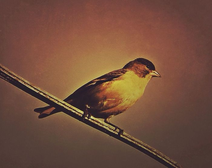 Backyard Birder EyeEm Nature Lover Bird EyeEm Best Edits