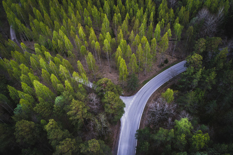 Aerial view of a road in the middle of green boreal forest Aerial Shot Aerial View Beauty In Nature Curve Day Drone  Finland Forest Growth High Angle View Landscape Motion Mountain Nature No People Outdoors Plant Road Scenics Tranquil Scene Tranquility Transportation Tree Waterfall Winding Road