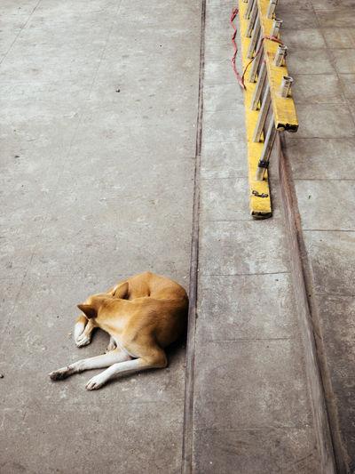 High angle view of dog sleeping on footpath
