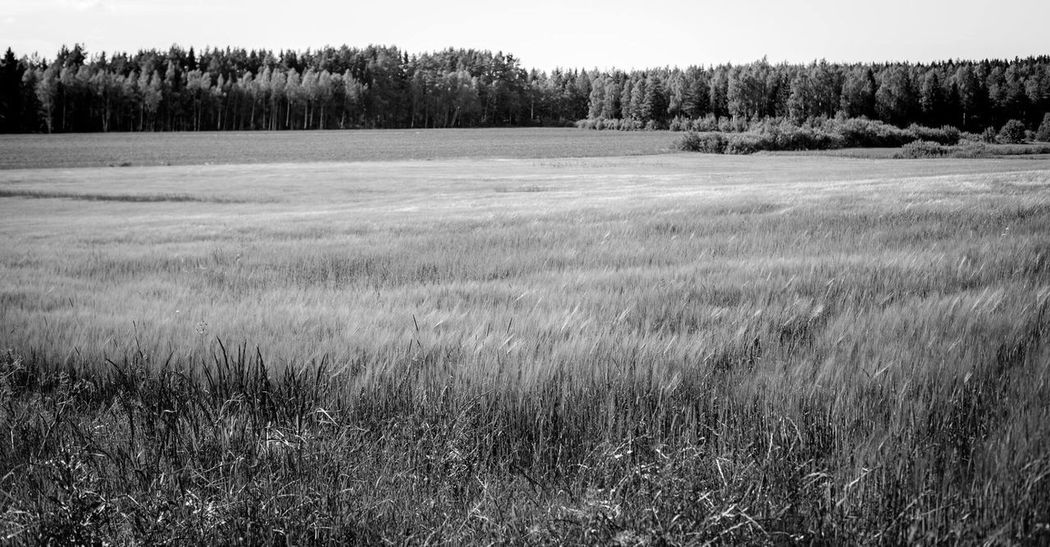 Forest in Åland åland  Aland Islands Aland Islands Scandinavia Finland Landscape Forest Field Monochrome
