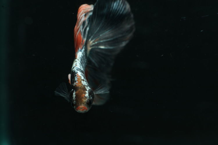 Close-up of fish swimming in tank