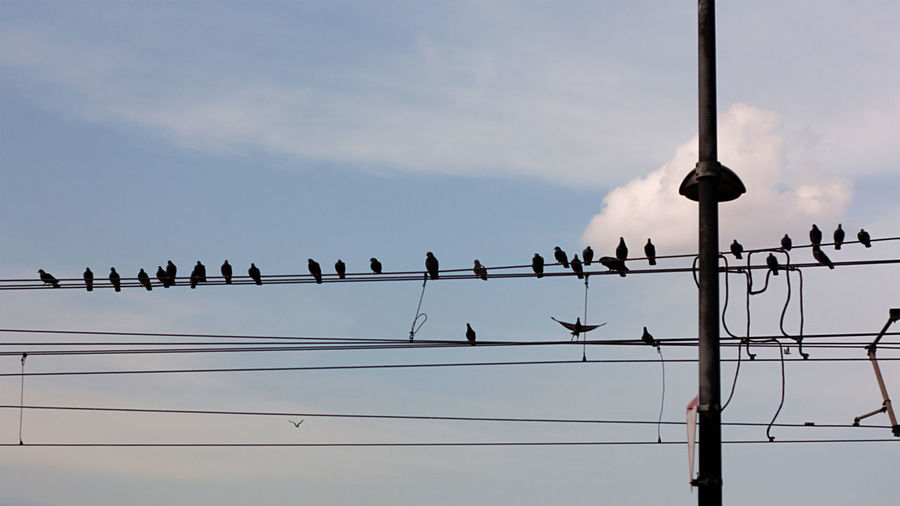 Dozens of Birds on the Tram Wires Birds Cable Cloud - Sky Connection Power Line  Silhouette Sky Tram Tramway Trolley Wires Wires And Sky